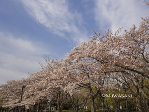800hutyukoueniwasaki_p4120102