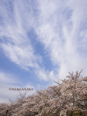 800hutyukoueniwasaki_p4120110