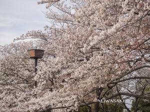 800hutyukoueniwasaki_p4120126