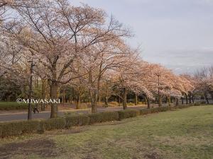 800hutyukoueniwasaki_p4120672
