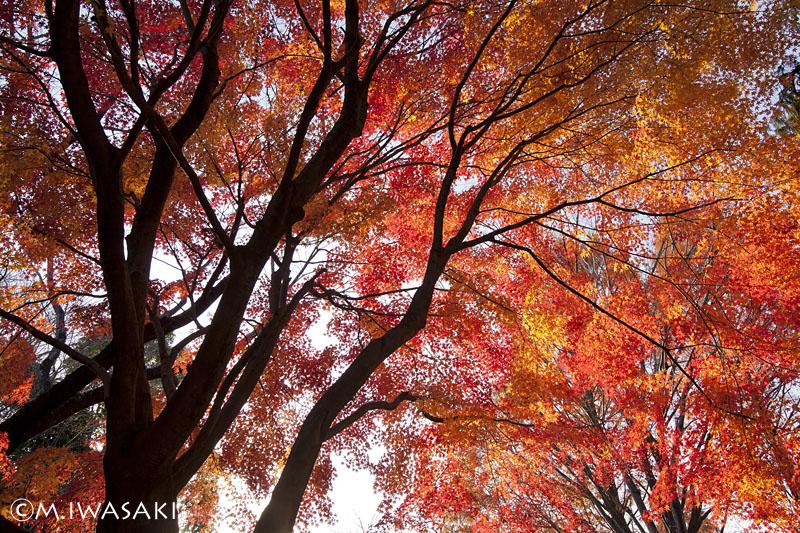 800syouwaiwasaki_1801