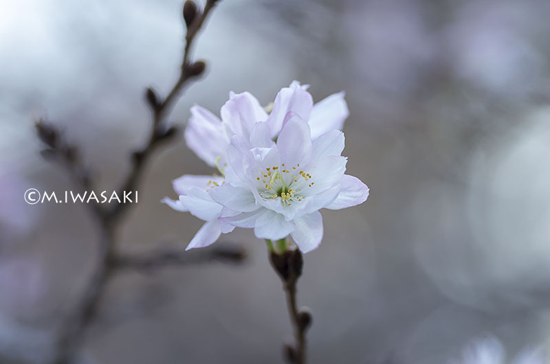 800sinjyukuiwasaki_imgp5832_2