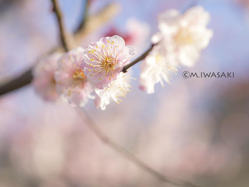800hutyuiwasaki_p10108182