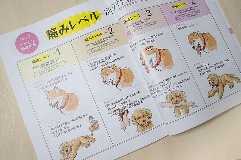 800inunokimotoiwasaki_dsc53982