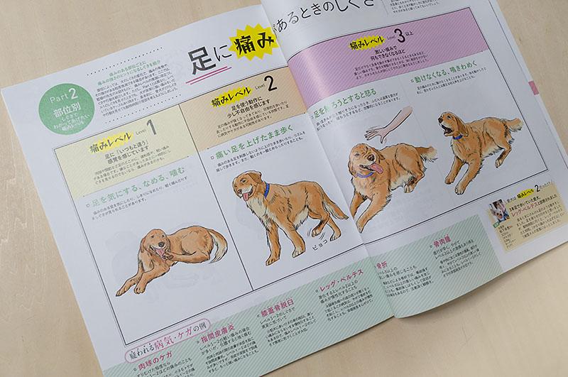 800inunokimotoiwasaki_dsc54012