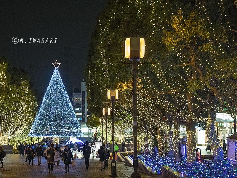 800irumiiwasaki_p1010572