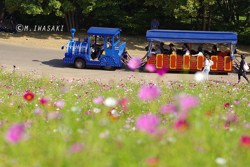 800kosumosuiwasaki_imgp1314