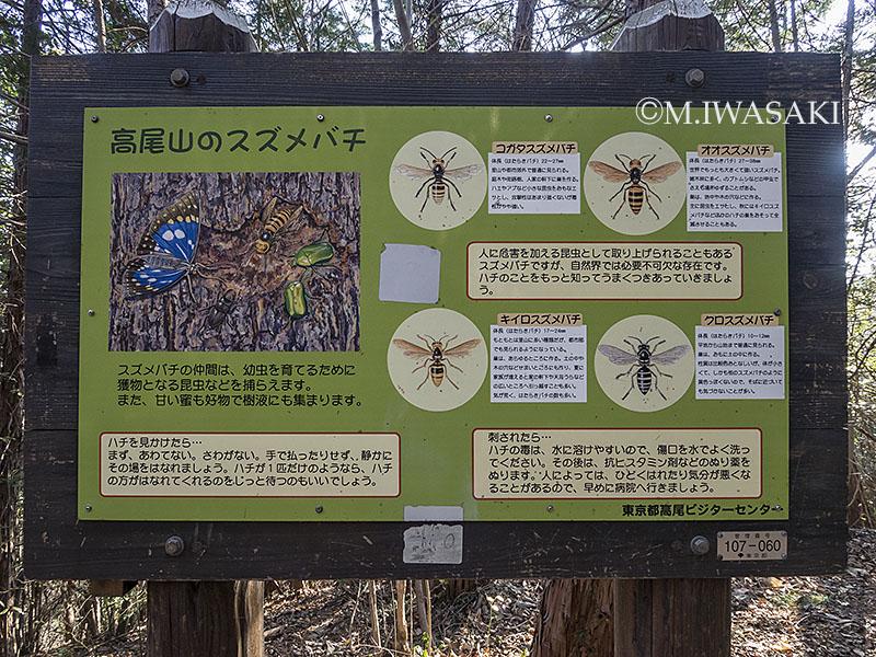 800takaosaniwasaki_p1040123
