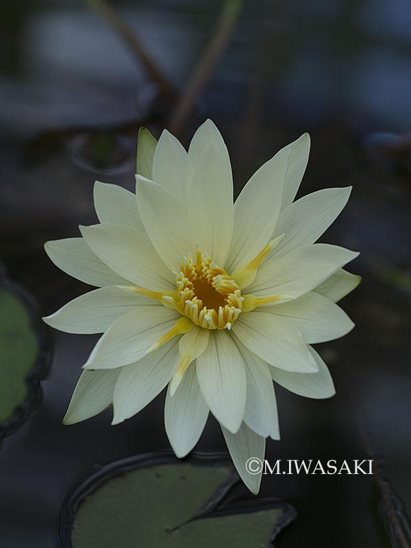 800hanaiwasaki_p3171275