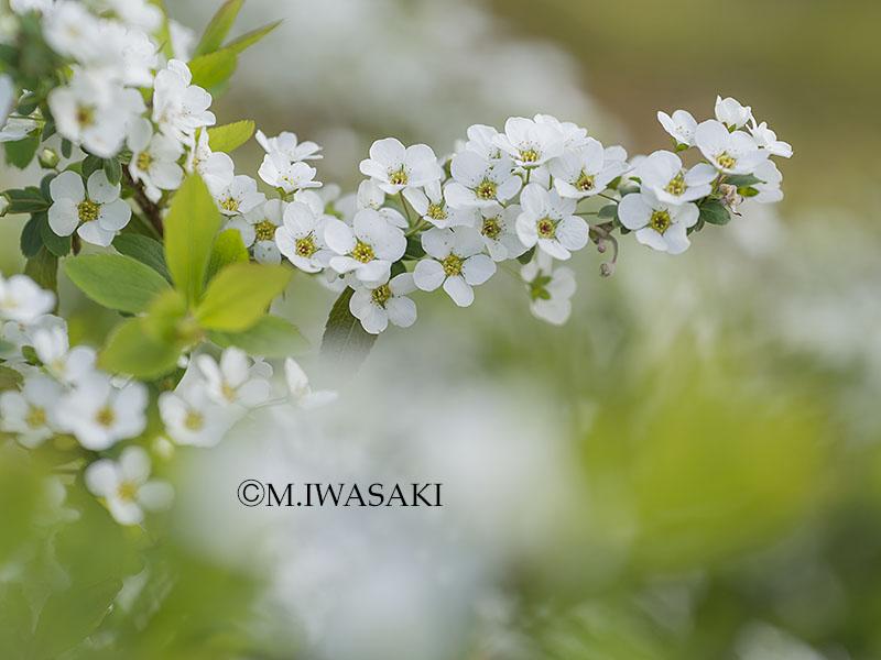 800hutyuiwasaki_p3290019