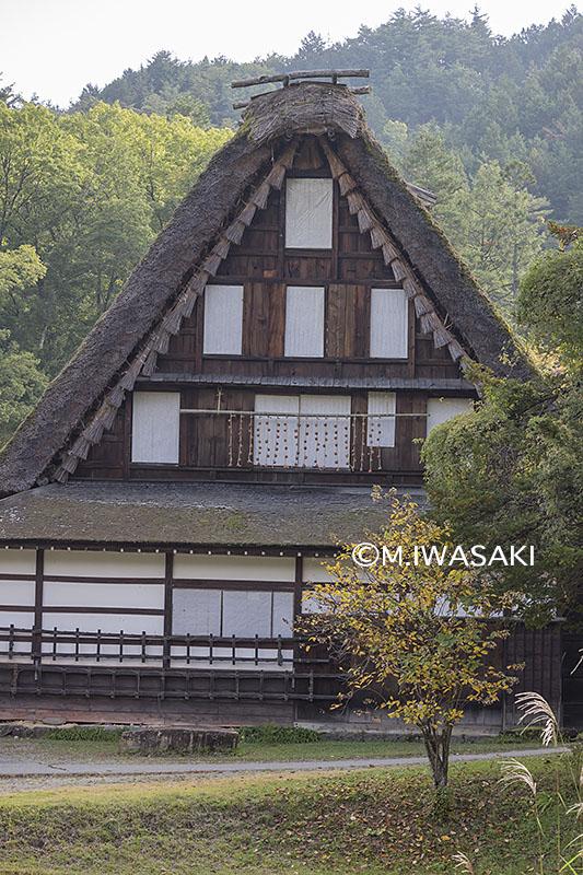 800takayamamaturiiwasaki_img_4730