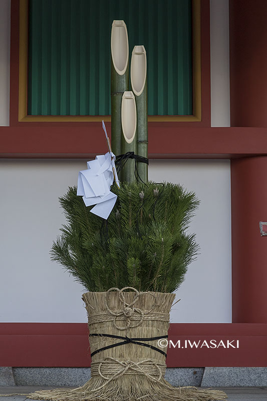 800takahatahudouiwasaki_iimgp7277