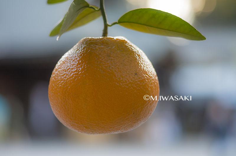 800ookunitamajinjyaiwasaki_igp12153