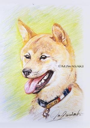 800iroenpituiwasaki_img_18442