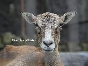 800tamaiwasaki_2